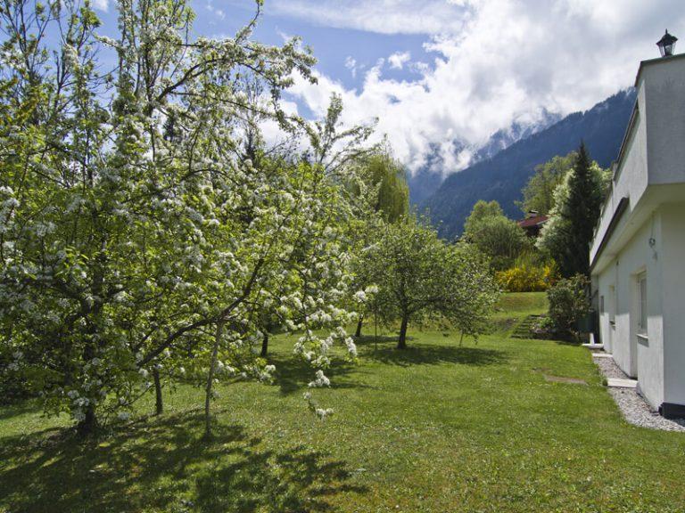 House - Spring in the garden